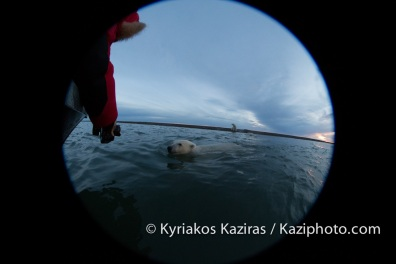 Kyriakos Kaziras-Polar Bear