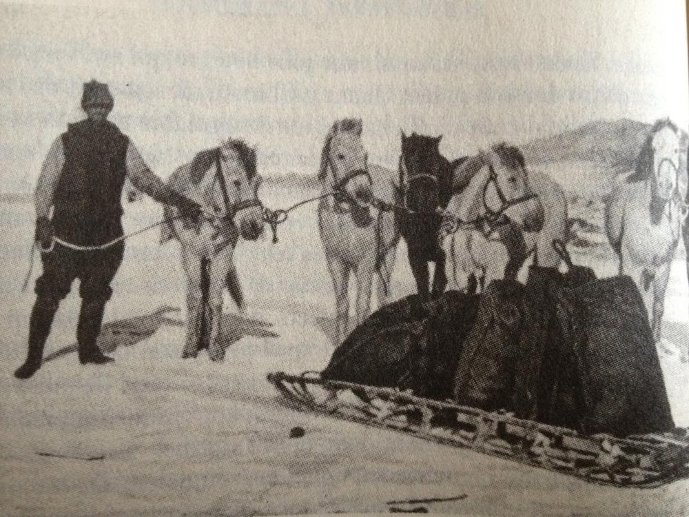 Expe Nimrod Poney de Mandchourie